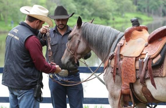 IBEqui promove reunião técnica sobre segurança jurídica e bem-estar animal nos esportes equestres