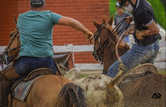 Estudo de relevância internacional comprova eficácia do protetor de cauda cônico e assegura bem-estar dos bovinos nas Vaquejadas