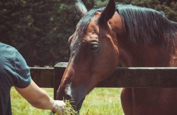 Aprenda como fortalecer o sistema imunológico dos cavalos